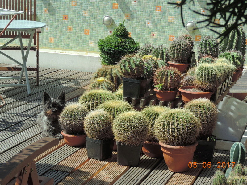 Cacti and Sukkulent in Köln, every day new flowers in the greenhouse Part 164 Bild_923