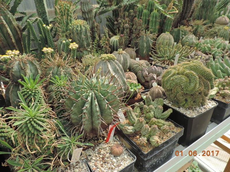Cacti and Sukkulent in Köln, every day new flowers in the greenhouse Part 164 Bild_991