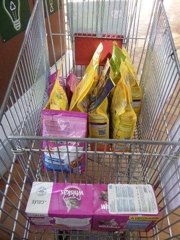 OPERATION CADDIES chez Truffaut les 24 et 25 mai ! Venez nombreux pour nous aider à collecter de la nourriture pour nos minous libres ! Sam_8941