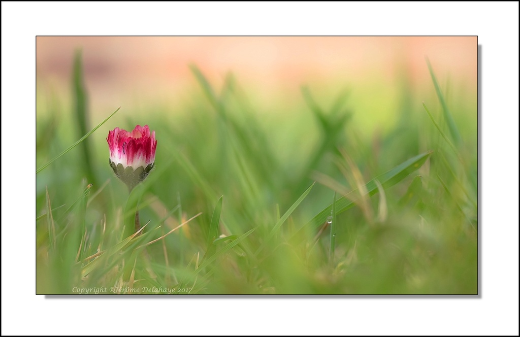 Bientôt le printemps? +2+1 P3110010