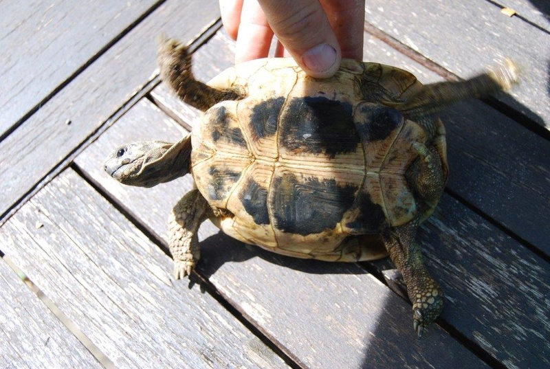 identification boetgerie femelle ou male 2-310