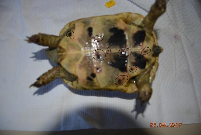 morsure animal sauvage Katana10