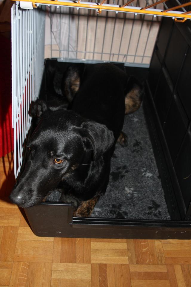 Transport en voiture des chiens et chats - Page 6 Img_7810