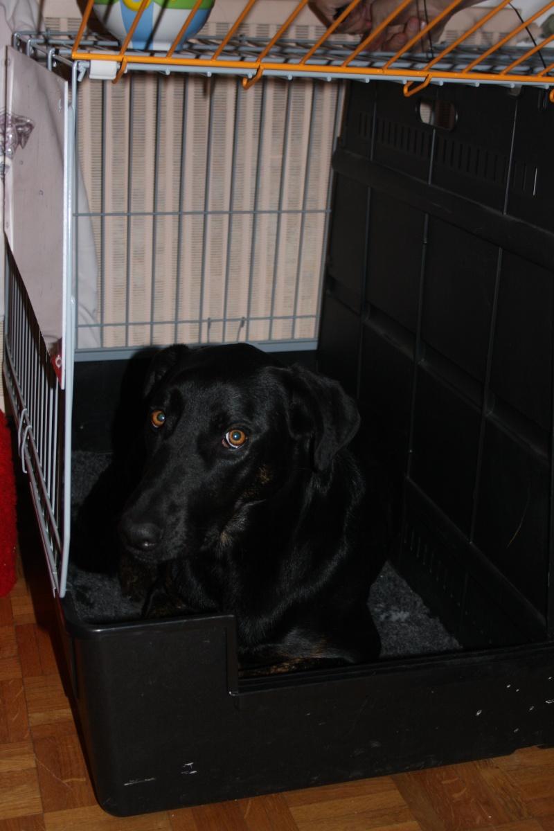 Transport en voiture des chiens et chats - Page 6 Img_7811