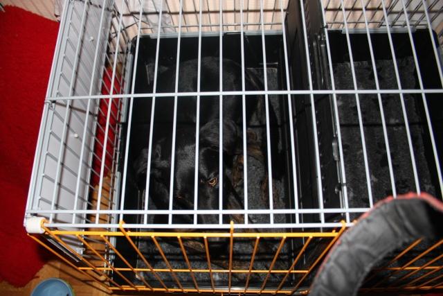Transport en voiture des chiens et chats - Page 6 Img_7813
