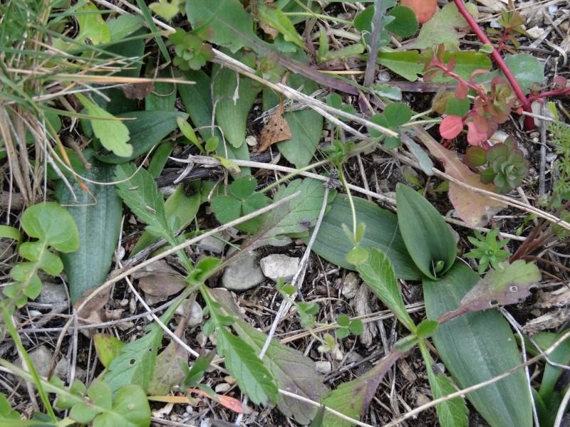 Orchidées et sangliers 2013-025