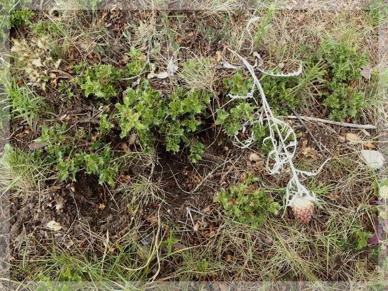 Orchidées et sangliers 2014-983