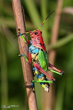 Le monde merveilleux des insectes 06af9b10