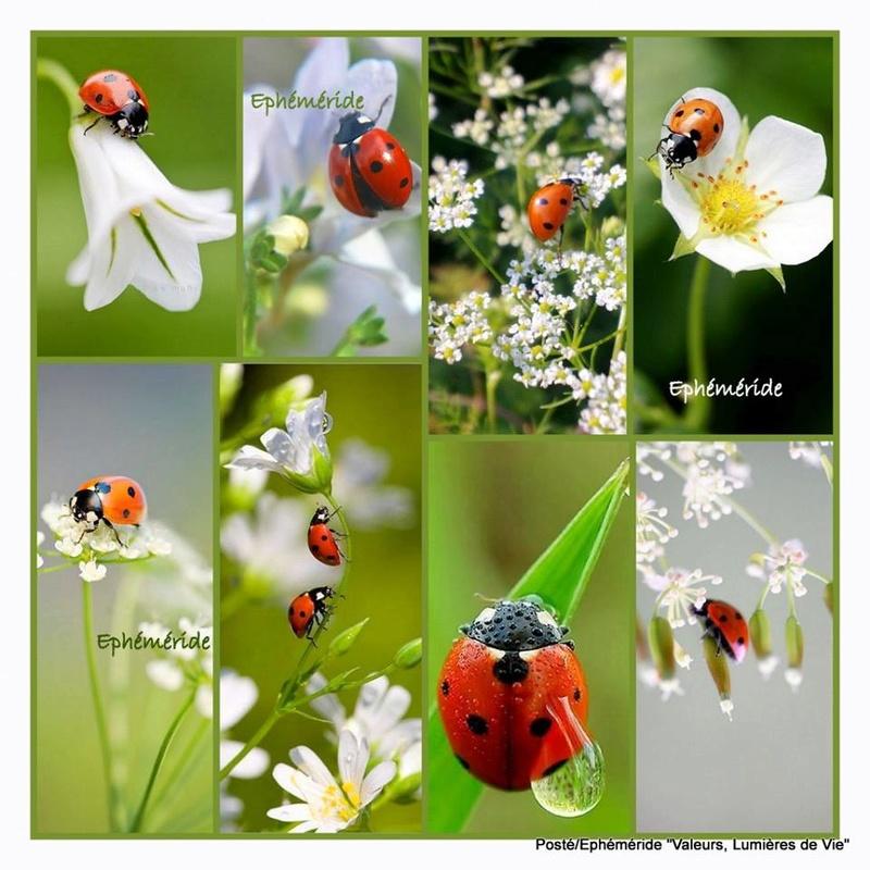 Le monde merveilleux des insectes - Page 2 13164410