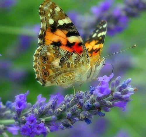 Le monde merveilleux des insectes - Page 3 16235710