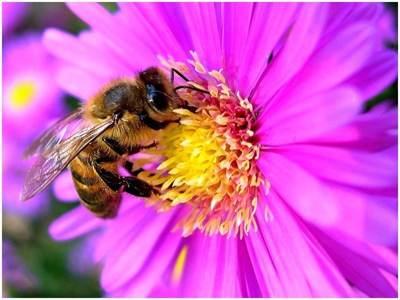 Le monde merveilleux des insectes 1682c410