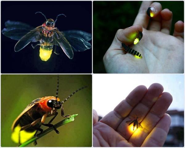 Le monde merveilleux des insectes 7d964e10