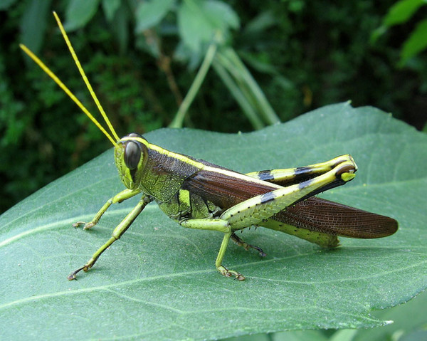Le monde merveilleux des insectes - Page 2 D8209010
