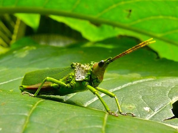 Le monde merveilleux des insectes Ec412410