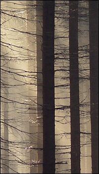 Cerf des Bois - Guerrier - M Sans_t18