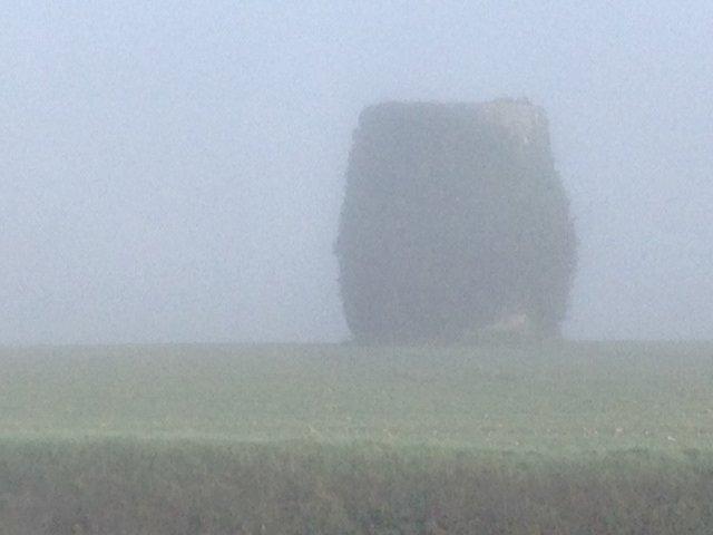 Le marais dans la brume... Photo_10