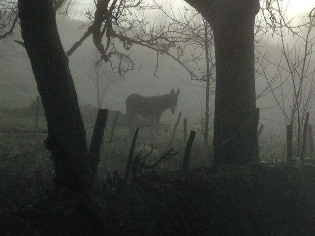 Le marais dans la brume... Photo_11