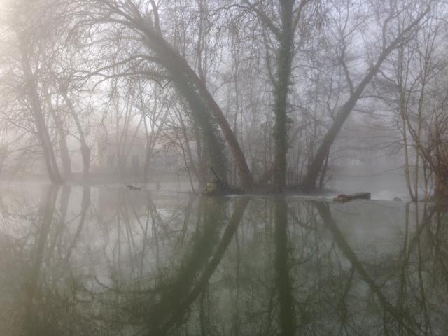 Le marais dans la brume... Photo_13