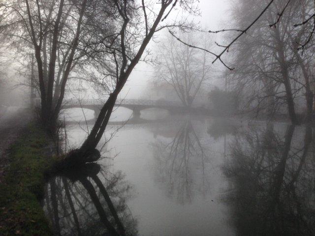 Le marais dans la brume... Photo_14