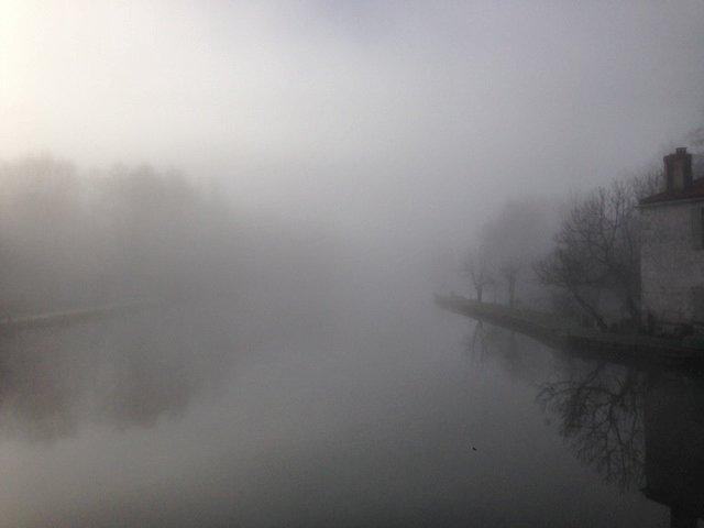 Le marais dans la brume... Photo_16