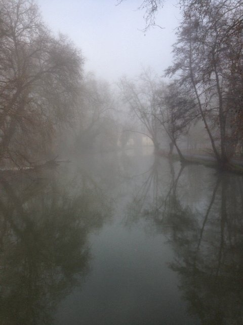 Le marais dans la brume... Photo_18