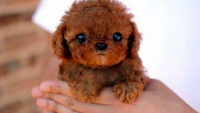 ¿Qué animal te representa? Cute-p10