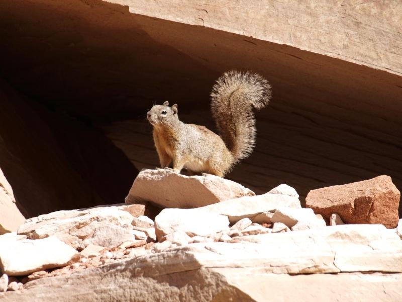 l'ecureuil.. P3123412