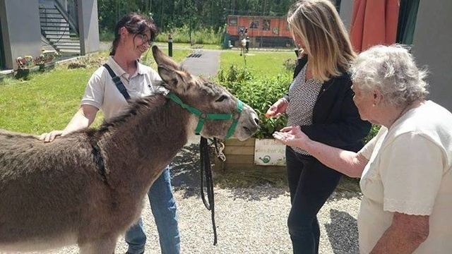Visites avec mes ânes !  Marly10