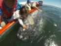 [Vidéo] Embrasser une baleine dans la nature G0030210