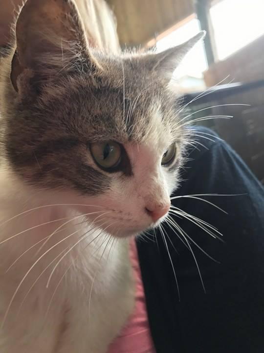 Recherche co-voit urgent pour 2 chats (sortie fourrière) le 10/06, de St Germain du pinel à St Martin des Champs!!  Chat_s11