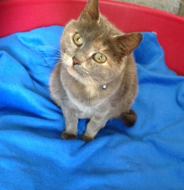 Recherche co-voit urgent pour 1 chatte de Bain de Bretagne à Brest! (sortie fourrière)  Chatte12