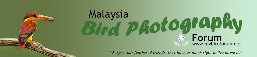 Malaysia Bird Photography Forum