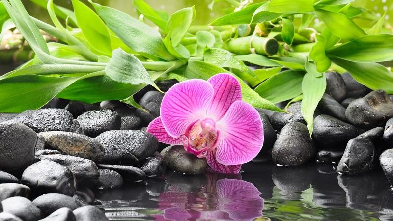 A toi, mon fils... Orchid10
