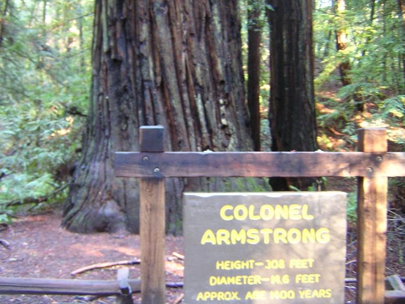Sequoia - redwood Dscn3524