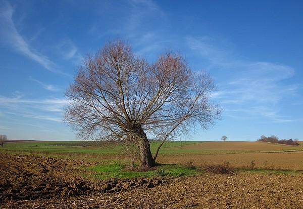 Un arbre Sortie10