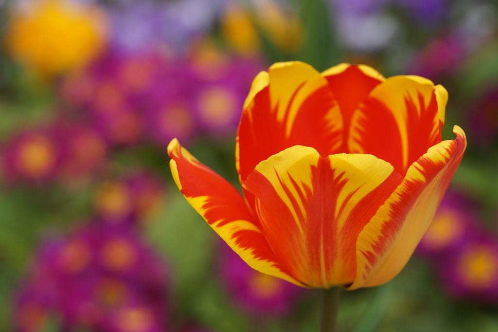 fleurs...à Paris Dsc01814
