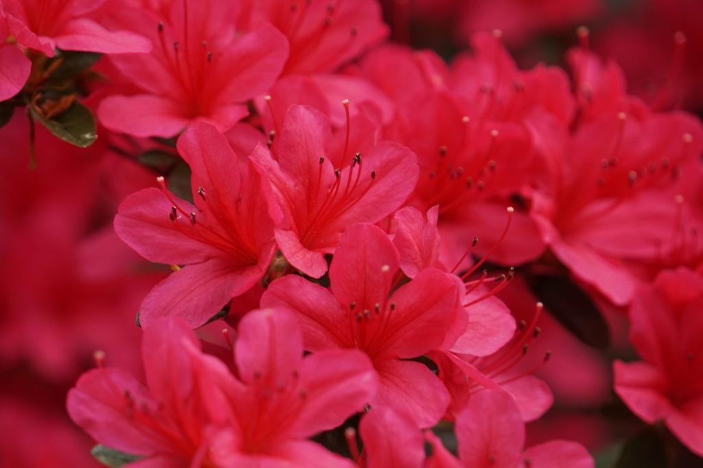fleurs...à Paris Dsc01817