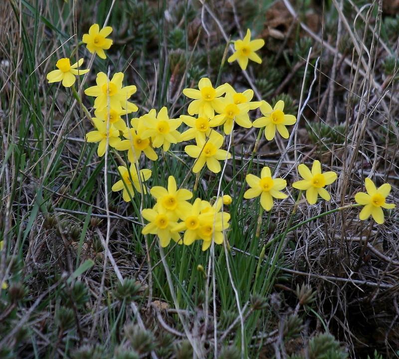Etat de floraison de St Paul à Toreille Img_7219