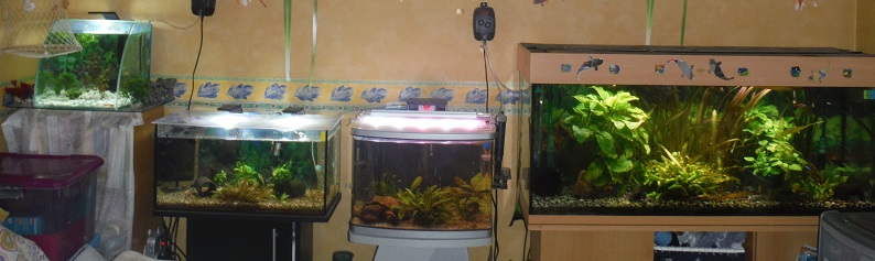 120 Litres version tropical Avril_10