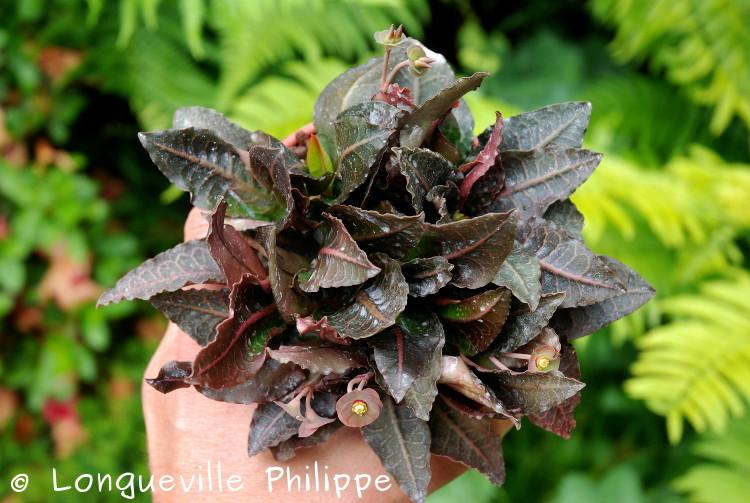 Euphorbia francoisii - Page 10 Dsc_3711