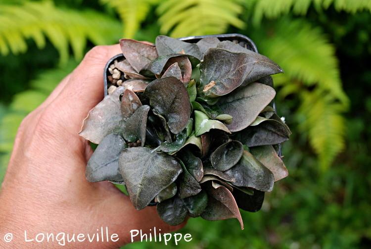 Euphorbia francoisii - Page 10 Dsc_3719