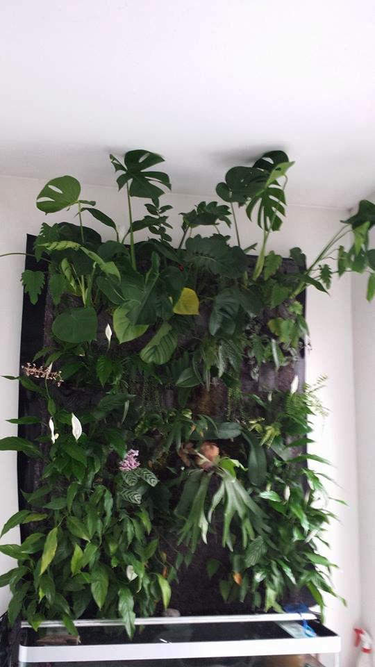 Mur végétal avec aquarium de 320L ---> Paludarium - Page 6 10006510