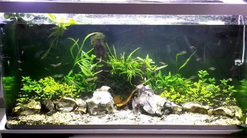 Mur végétal avec aquarium de 320L ---> Paludarium - Page 6 2014-011