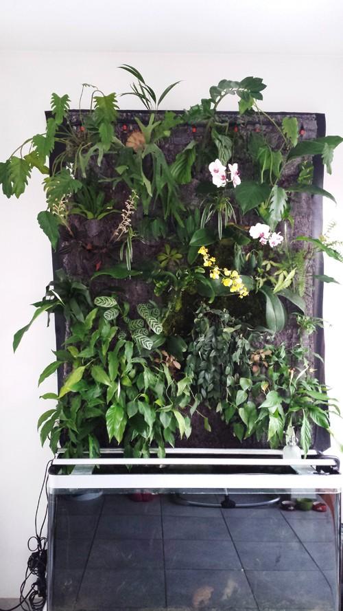 Mur végétal avec aquarium de 320L ---> Paludarium - Page 5 20140111