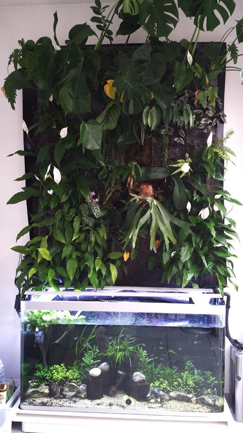 Mur végétal avec aquarium de 320L ---> Paludarium - Page 6 20140414