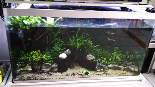 Mur végétal avec aquarium de 320L ---> Paludarium - Page 6 20140415