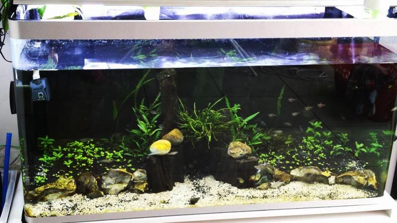 Mur végétal avec aquarium de 320L ---> Paludarium - Page 6 Bac10