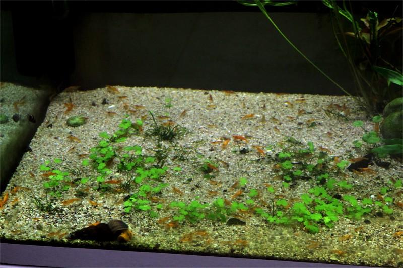 Mur végétal avec aquarium de 320L ---> Paludarium - Page 4 Img_0010