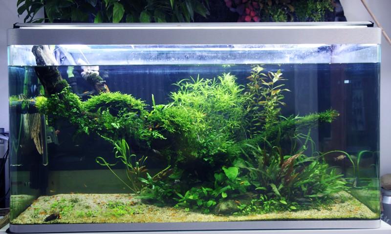 Mur végétal avec aquarium de 320L ---> Paludarium - Page 4 Img_0011