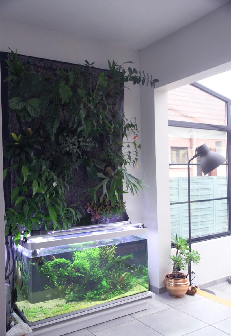 Mur végétal avec aquarium de 320L ---> Paludarium - Page 4 Img_0110
